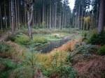 Himmelswasserbiotop im Weisinger Forst